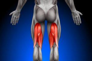 Musculation des ischio-jambiers11