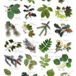 arbres especes