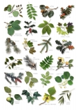 Comment reconnaitre les arbres pendant votre randonnée